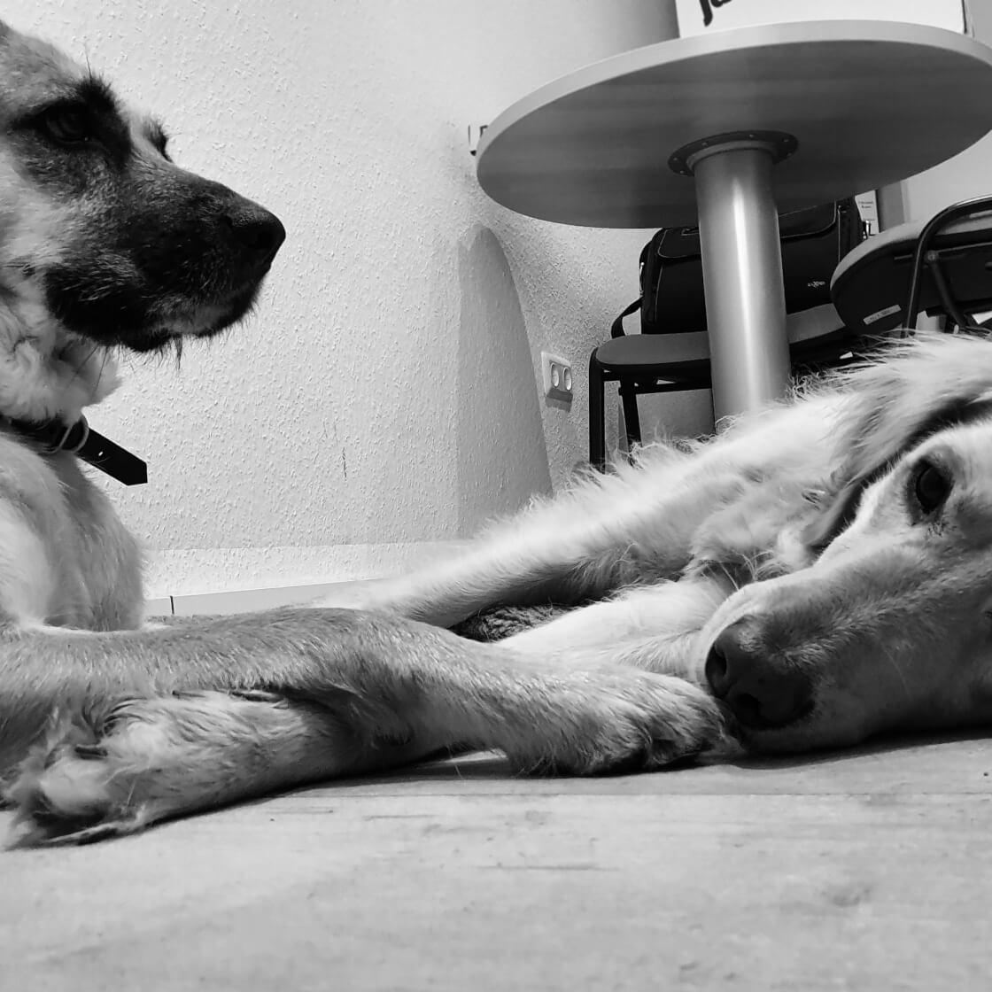 Charly & Stella